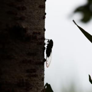 虫の音から国際理解