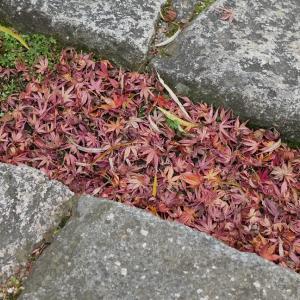 近江の旅(21)八幡堀を歩く