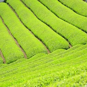 茶流痩々★国産プーアル茶の3つの成分が痩せるをサポート|1日1リットルでダイエット