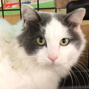 奄美の猫さん 応援したい