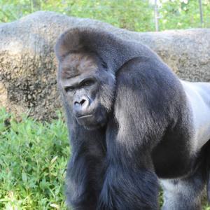 週末は名古屋へ 東山動物園無料開放 大塚屋 刈谷ハイウェイオアシス