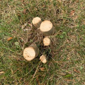 シンボルツリーを伐採した私が買った樹木