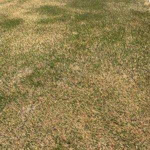 3月31日 シーズンインの芝生の庭予定表