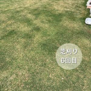 芝刈り6回目とシバゲンDF散布