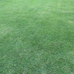 芝刈り17回目 今年は成長が遅い