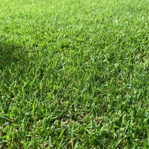 芝生の庭にかかった費用を大公開!