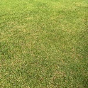 ご近所さんがこぞって天然芝の外構にする理由