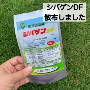 芝生の除草剤シバゲンDF散布後1週間 効果は?