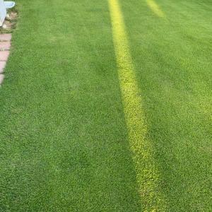 芝刈り28回目 シーズンオフ目前の芝生