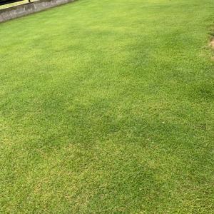 芝生の草取りを劇的に楽にする除草剤