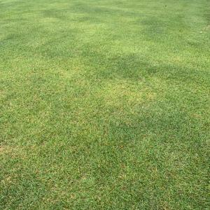 秋の芝生 天然芝はいつごろまで緑?