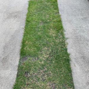 駐車場をケチるために芝生を張った結果