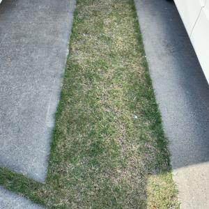 北側で日当たりが悪くても芝生は育つのか?
