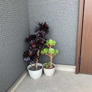 夫にダサいと言われた玄関の植物