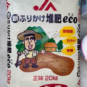 芝生の土壌改良 有機肥料『ふりかけ堆肥eco』を散布
