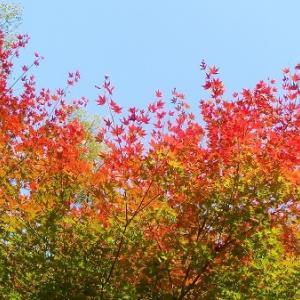 秋晴れ森林浴低山ハイク8km