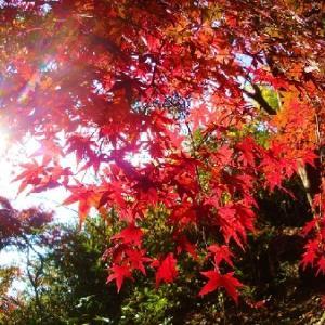 秋晴れホットフラッシャー森林W5km