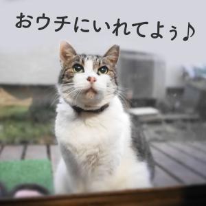 おねだり太郎ちゃん(ΦωΦ)♡