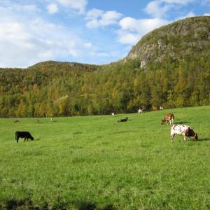 森を通って行くNordtindenで12キロのハイキング