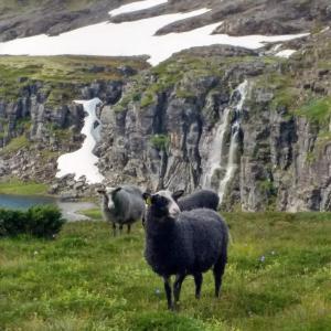 道を間違えた!電波なし標識なし、Aurlandsfjelletの山を散策