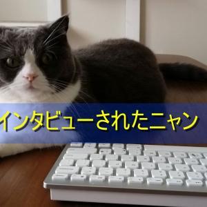 猫ブロガーが50項目の質問に答えたニャ!