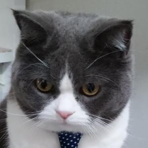 猫ブログにクレームが来ました。