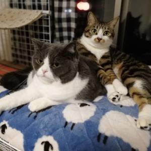 冬の静電気は痛いからボクたち猫は嫌いだニャン。これで解決シタニャ