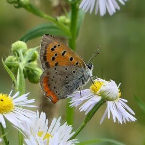 歩きながら撮った夏の花とか虫とか。。。