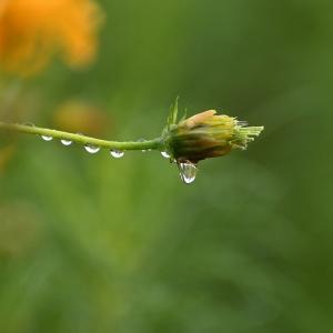 Morning dew ~ silent world
