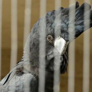 初めて見た鳥 ~ キャンベルタウン野鳥の森 その1