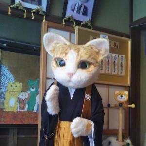 猫好き信者の極楽浄土、猫猫寺へ行ってきた