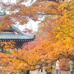 鍬山神社の紅葉を見てきた