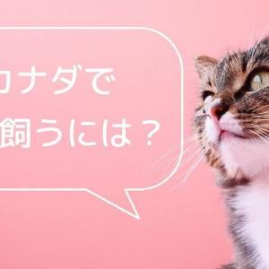 【体験談】カナダで猫を飼うには?費用や引き取りのプロセスまで