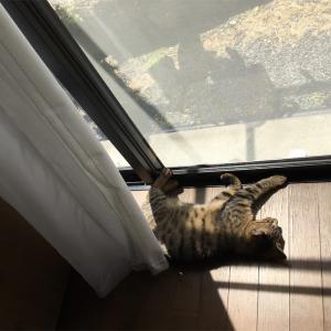 猫部屋の大掃除