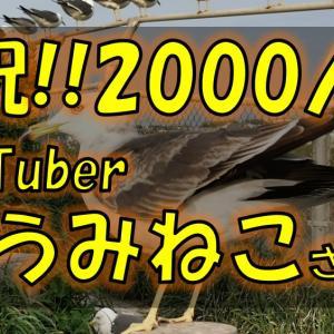 【八戸YouTuber紹介】「うみねこ」さんがチャンネル登録者数1000人突破しました!!
