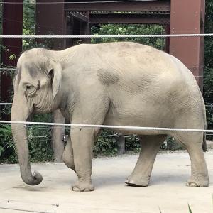 休日は子供と一緒に動物園!上野動物園の年間パスポートを絶対買うべき5つの理由