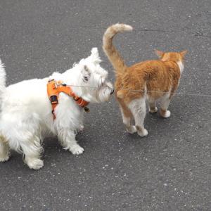やっぱり猫が好き!?