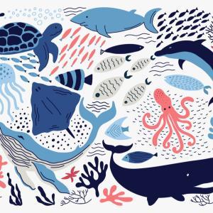 かわいい深海魚15選:気持ち悪い深海魚ばかりじゃない!
