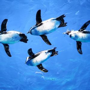池袋サンシャイン水族館で割引を受けるオススメの方法【安いのはどれ?】