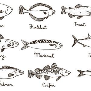 有名な深海魚11選:よく紹介される深海魚たち