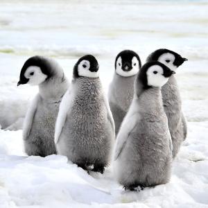 サンシャイン水族館の福袋が独特【サメの卵?ペンギンの羽?】