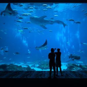 水族館が動物園よりもデートにオススメな7つの理由