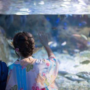 新江ノ島水族館で割引を受けるオススメの方法【安いのはどれ?】