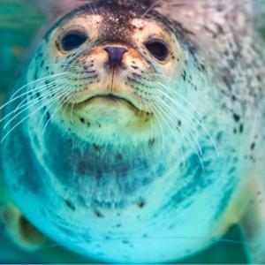 「サンピアザ水族館」の見どころ|営業時間・料金・アクセス
