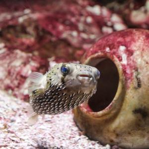 行く前に知っておきたい!「しものせき水族館 海響館」の見どころ解説