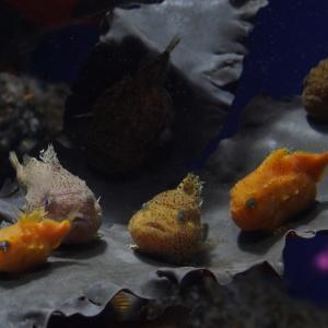 行く前に知りたい?「越前松島水族館」の見どころ解説