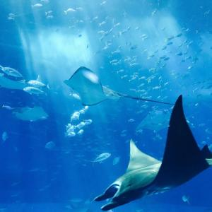 【大人向け】東海地方のオススメ水族館7選