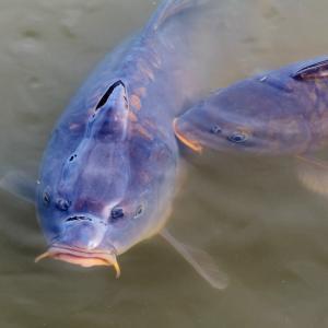 茨城「山方淡水魚館」の見どころを詳しく解説