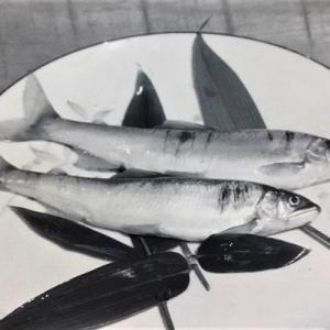 長良川の鮎釣りを遡る 第2話