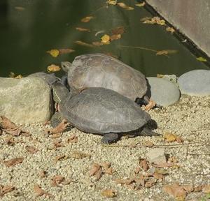 飯田動物園&かざこし公園